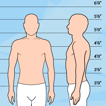 Average Height & Weight Male Body Graphic