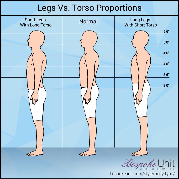 Legs Versus Torso Proportions